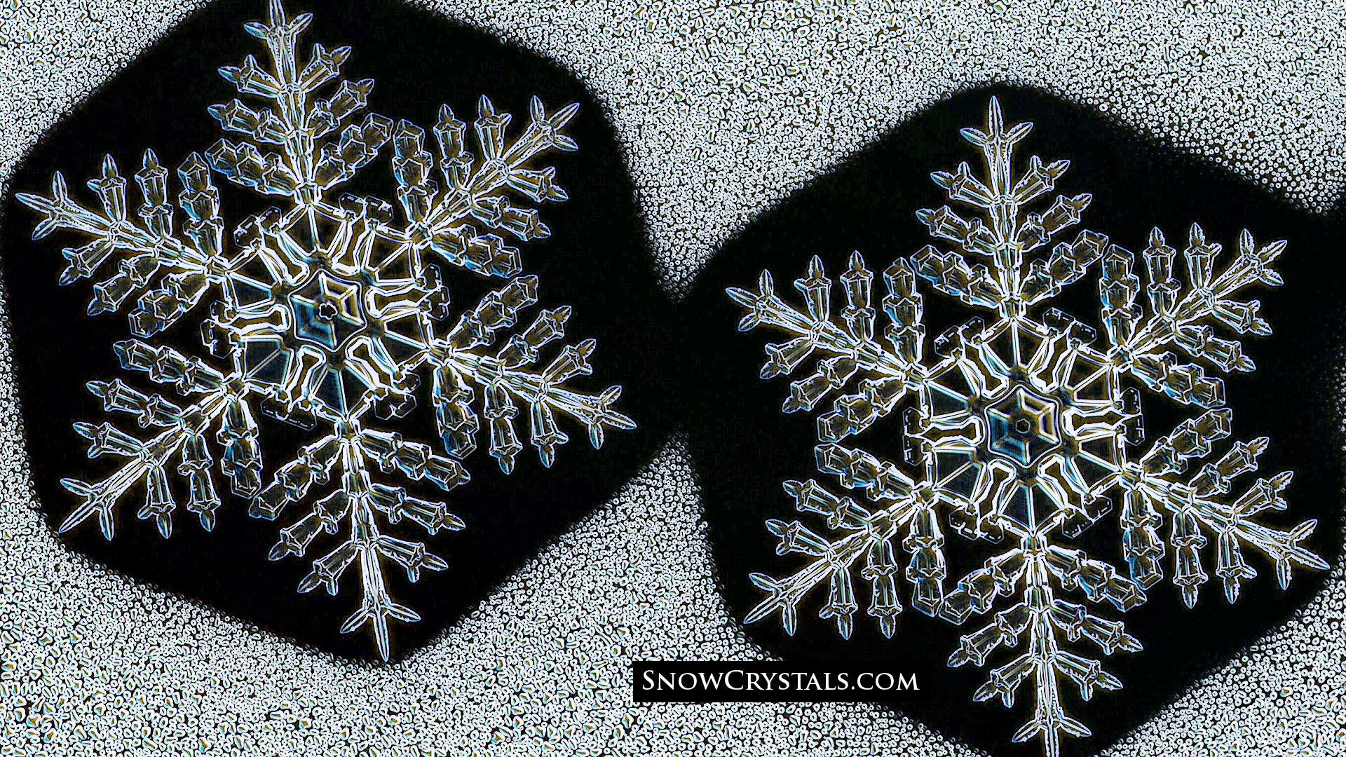 identical twin snowflakes snowcrystals com